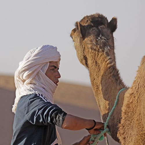 Un homme s'occupe d'un chameau lors du séjour méharée dans le désert en famille