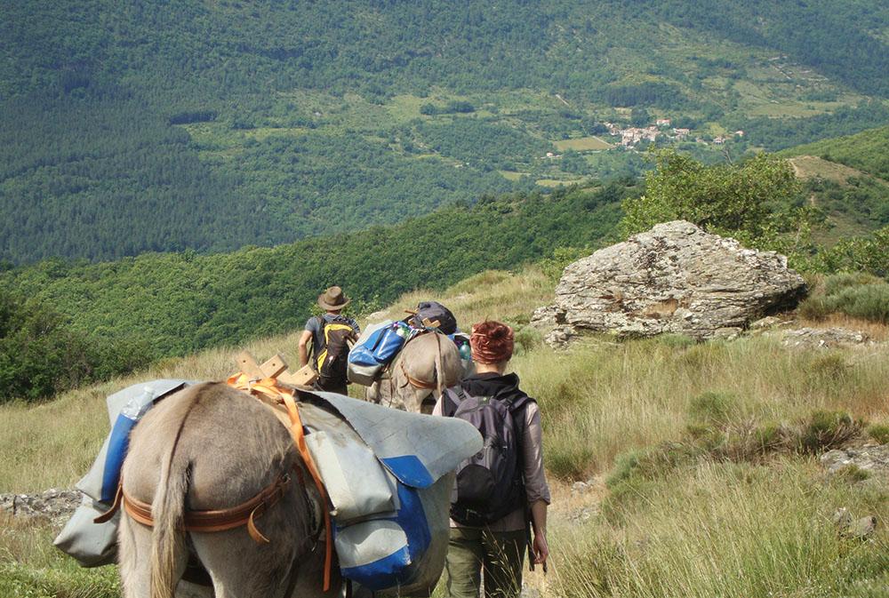 Randonnée avec des ânes en Cévennes en pleine nature. rando âne en famille loin de la foule du chemin de Stevenson