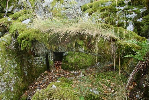 roche couverte de mousse lors du séjour astronomie dans les Cévennes. Astronomie en France