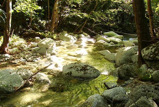 rivière lors du séjour jeunesse dans les Cévennes