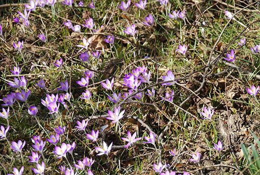 Champs de fleurs lors du voyage randonnée et méditation dans les Cévennes randonnée meditation