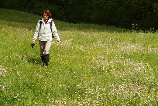 aubrac_botanique_randonnee