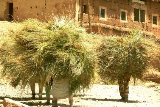 Hommes portant du foin lors des rencontres berbères