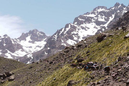 Convoit de mules portant les sacs lors du séjour Ascension du Toubkal. En font des montagnes enneigées.