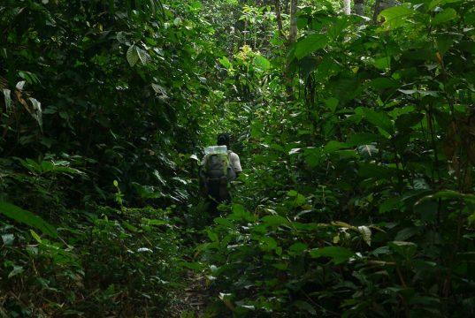 expedition-gorilles-congo-13
