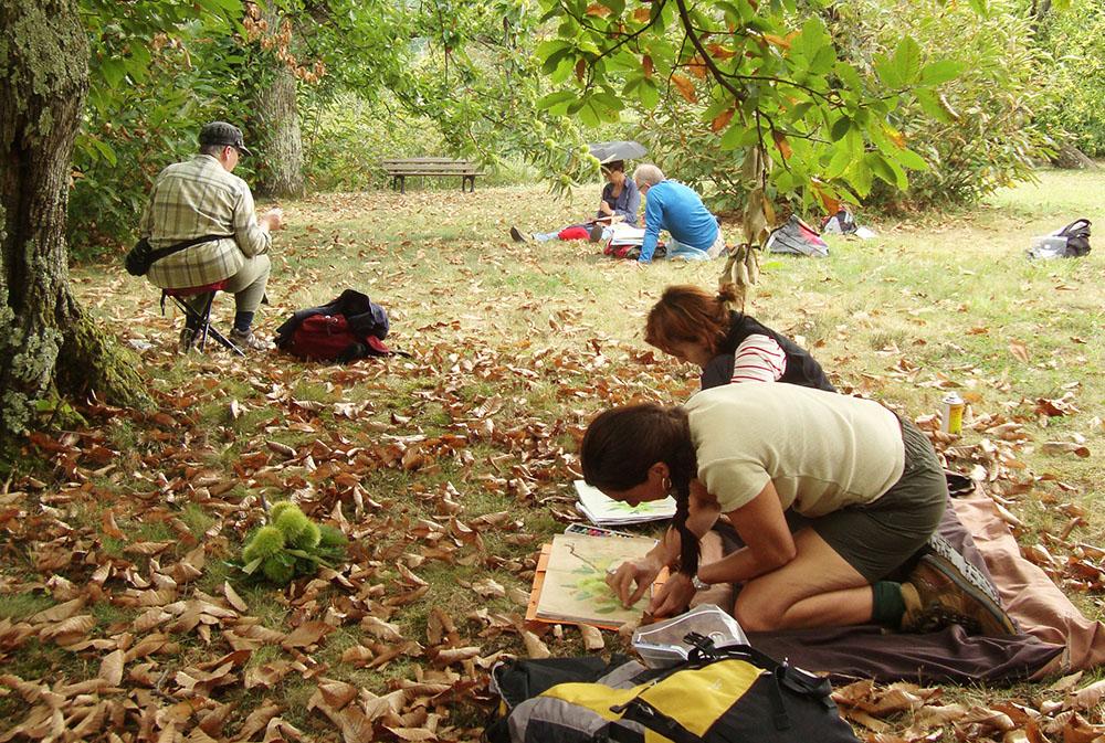 Des croqueurs se sont installés dans une chataigneraie à Aumesssas et dessinent une bogue de châtaigne