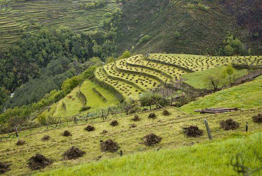 Jardins en terrassiers, voyage dessin Portugal