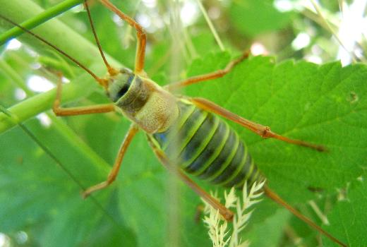 Photo d'un insecte prise en macro