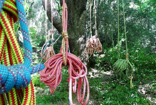 grimpe-arbres-faune-4