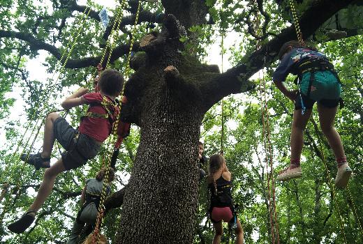 Des enfants grimpent dans les arbres avec des mousquetons