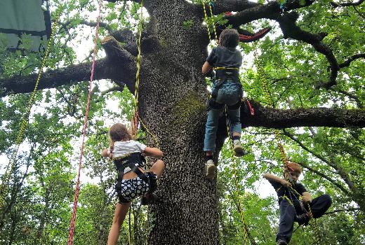 Des enfants suspendus à un arbre font de la grimpe
