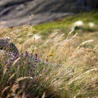 Voyage botanique cévennes