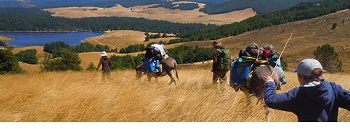 Randonnée itinérante avec les ânes dans les Cévennes sauvages