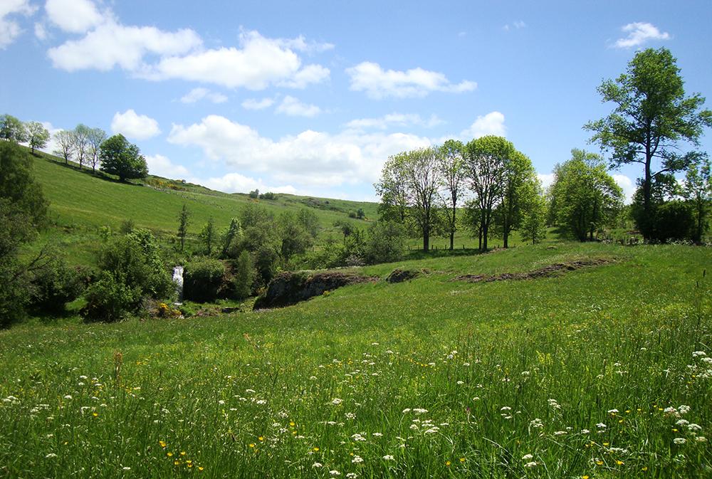Joli champ tout verdoyant et fleuri, avec des arbres et au fond un ruisseau