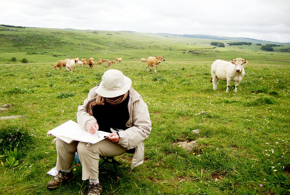 Une voyageuse en train de dessiner entourée de vaches sur les plateaux de l'Aubrac