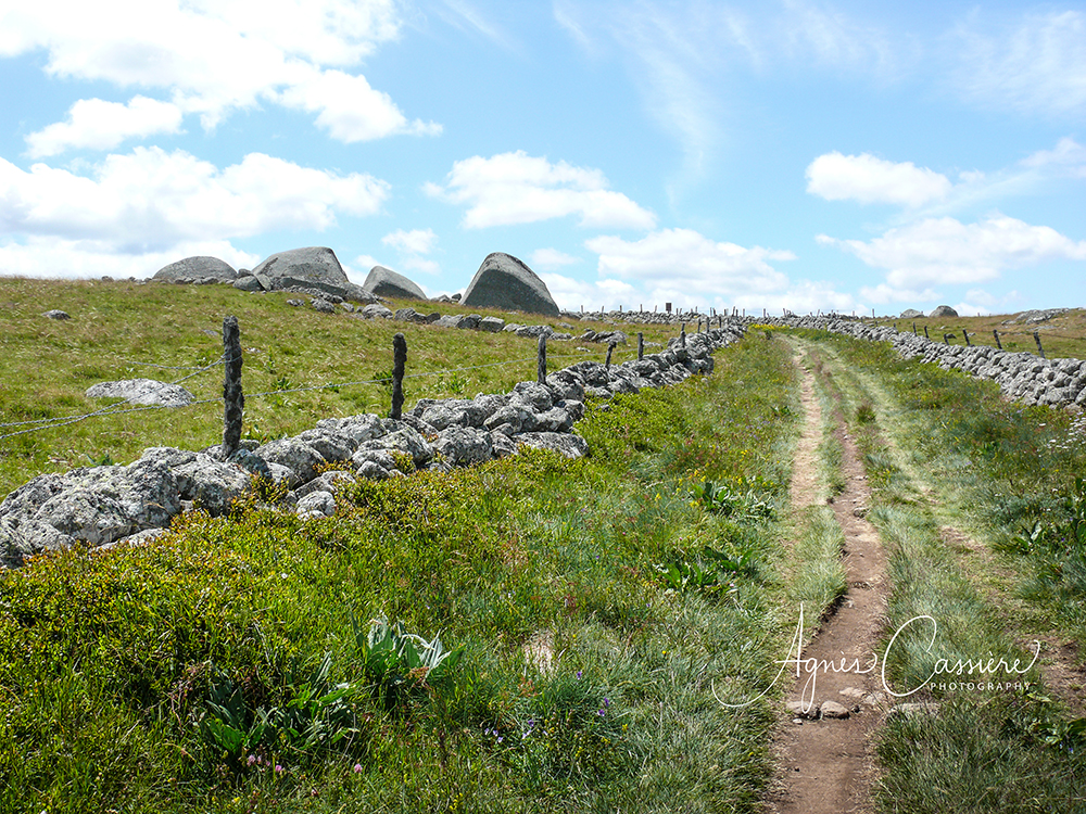 Sentier d'Aubrac