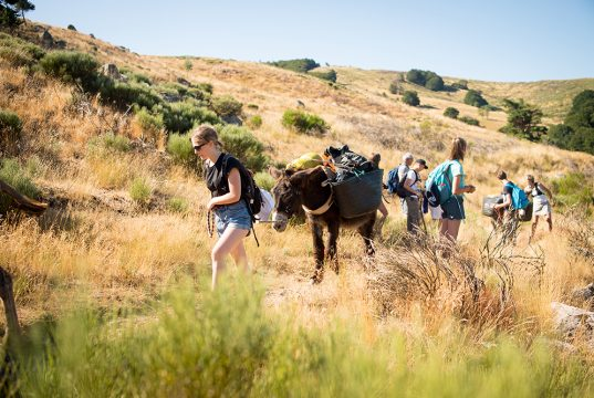 Randonée avec nos ânes dans les Cévennes loin du chemin de Stevenson pour une réelle immersion nature