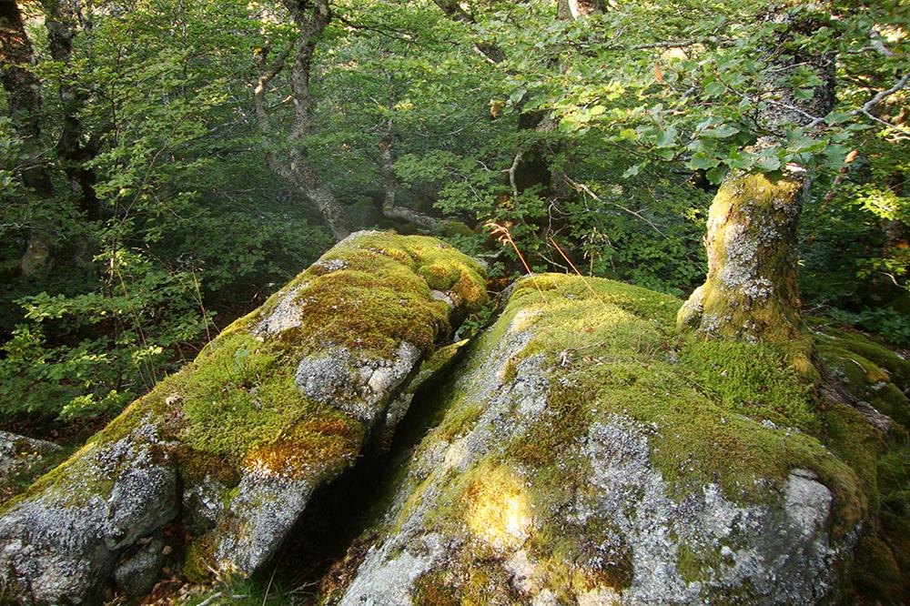 forêt de druide pour notre séjour jeunesse apprenti sorcier