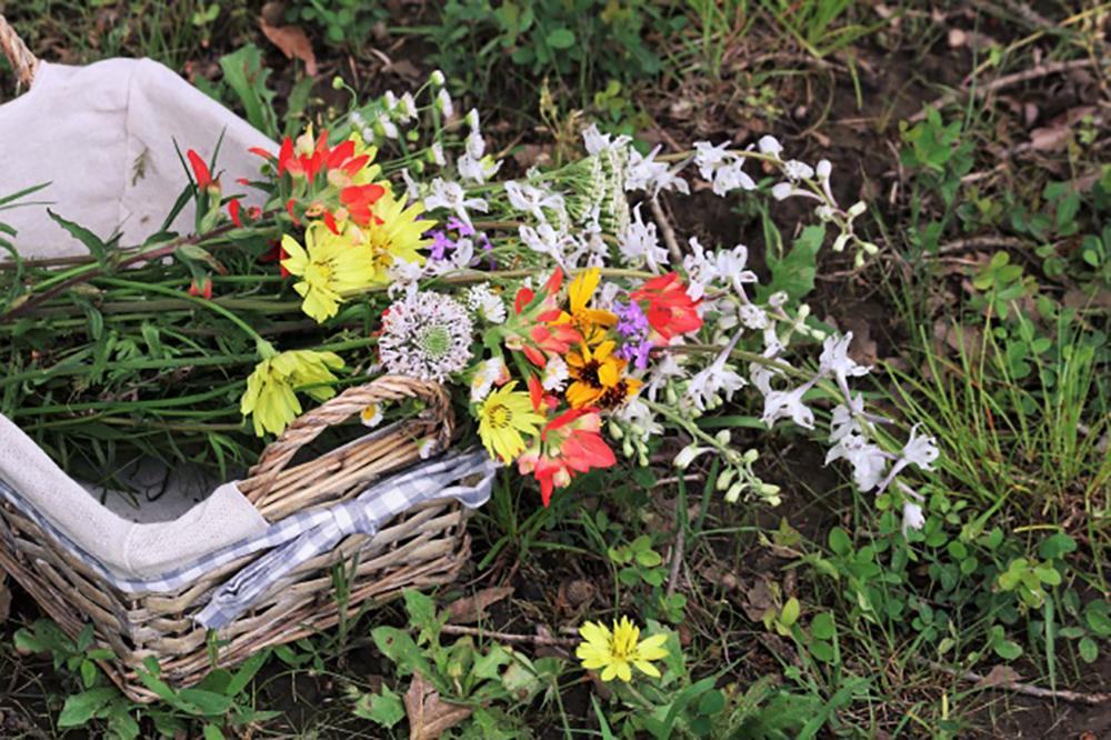 fleurs sauvages cueillies lors de notre séjour jeunesse apprenti sorcier