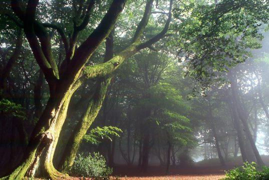 Forêt magique durant notre séjour jeunesse apprenti sorcier